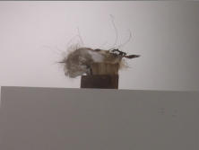 BAD HAIR DAY, 5 x 7.5 x 4 - 5 x 7.5 x 4 - Honeycomb cardboard, wood, plaster, human & cat hair, coconut fiber